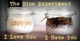 Masaru Emoto's RiceExperiment